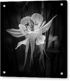 Flower In Black And White 1 Acrylic Print