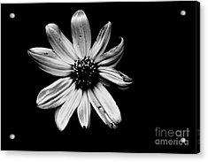 Flower In The Dark Acrylic Print by Xn Tyler