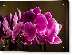 Flower In The Window Light Acrylic Print