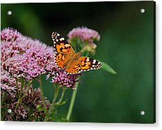Flower Kissed By Butterfly Acrylic Print by Judith Russell-Tooth