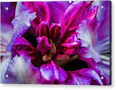 Flower Love  Acrylic Print by Naomi Burgess