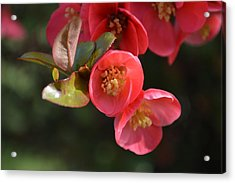 Flower Love Acrylic Print by Sheldon Blackwell