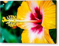 Flower Macro 2 Acrylic Print