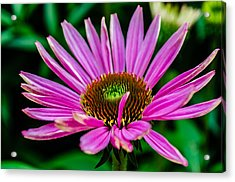 Flower Macro 3 Acrylic Print