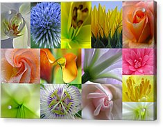 Flower Macro Photography Acrylic Print by Juergen Roth