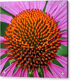 Acrylic Print featuring the photograph Flower Macro  by Trace Kittrell