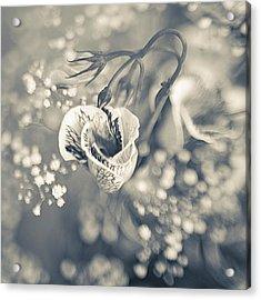 Flower Acrylic Print by Mark-Meir Paluksht