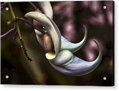 Flower Of A Jade Vine Acrylic Print by Julie Palencia