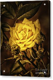 Flower Of Friendship  ... Acrylic Print by Chuck Caramella