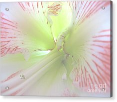 Flower Of Light Acrylic Print
