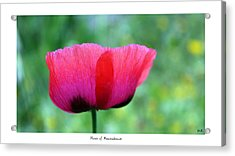 Flower Of Remembrance Acrylic Print by Martina  Rathgens