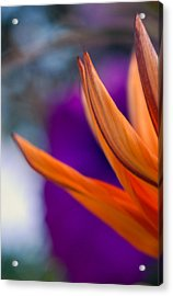 Flower On A Tabletop Acrylic Print by Bill LITTELL