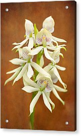 Flower - Orchid - A Gift For You  Acrylic Print by Mike Savad