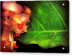 Flower - Orchid - Phalaenopsis Orchids At Rest Acrylic Print by Mike Savad