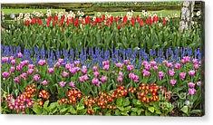 Flower Panorama Acrylic Print