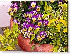 Flower - Pansy - Purple Posies  Acrylic Print by Mike Savad