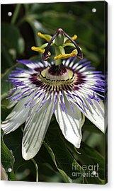 flower-Passionfruit Acrylic Print
