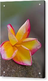 Acrylic Print featuring the photograph Flower Petals - Bali by Matthew Onheiber