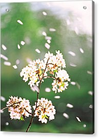 Flower Petals Floating In Air Acrylic Print