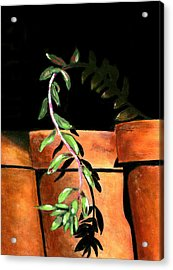 Flower Pots Acrylic Print by Karyn Robinson