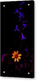 Acrylic Print featuring the photograph Flower Power by Atom Crawford