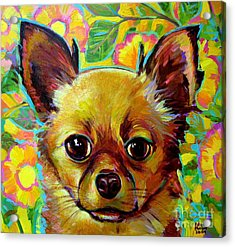 Flower Power Chihuahua Acrylic Print by Robert Phelps