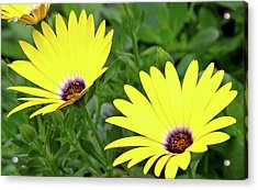 Flower Power Acrylic Print by Ed  Riche