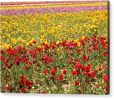 Acrylic Print featuring the photograph Flower Rainbow by Nathan Rupert