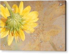 Flower Rhythm Acrylic Print