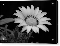 Flower  Acrylic Print by Ron White