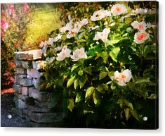 Flower - Rose - By A Wall  Acrylic Print by Mike Savad