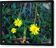 Flower Acrylic Print by Sky Skier