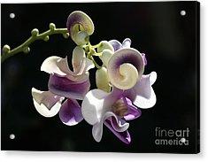 Flower-snail Flower Acrylic Print by Joy Watson