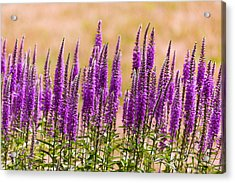 Flower - Speedwell Figwort Family - I Dream Of Lavender  Acrylic Print by Mike Savad