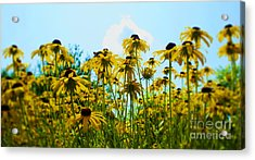 Flower - Sunflower Worshipers - Luther Fine Art Acrylic Print