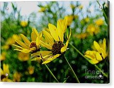 Flower - Sunning Sunflowers - Luther Fine Art Acrylic Print