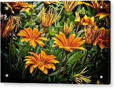 Flower Town Acrylic Print