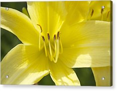 Acrylic Print featuring the photograph Flower  by Trace Kittrell