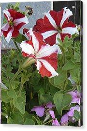 Flower Trios B Acrylic Print