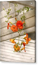 Flower - Trumpet Melodies Acrylic Print by Mike Savad