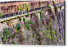 Flower Wall Along The Arno River- Florence Italy Acrylic Print by Jon Berghoff