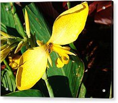 Flower With A Bee Acrylic Print by Van Ness