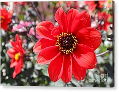 Acrylic Print featuring the photograph Flower1 by Theresa Ramos-DuVon