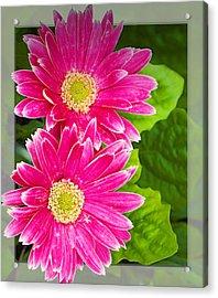 Flower1 Acrylic Print by Walter Herrit