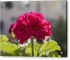 Flower2 Acrylic Print by Amr Miqdadi