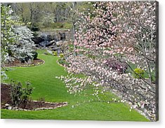 Flowering Dogwoods In Cleveland Park's Rock Quarry Falls  Acrylic Print