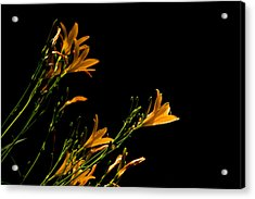 Flowering Golds II Acrylic Print by Kathi Isserman