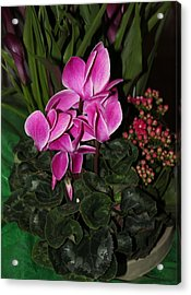 Flowering Plant Acrylic Print by Cyril Maza