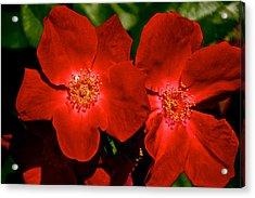 Flowering Reds Acrylic Print by Kathi Isserman