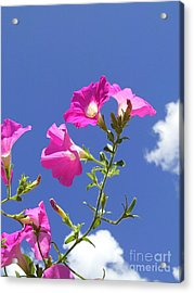 Flowering To Life II Acrylic Print by Daniel Henning